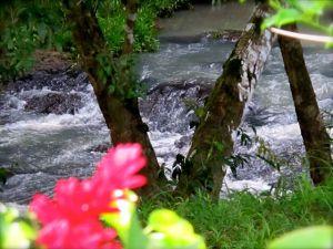 Rio Palmar en Valle Miraflores
