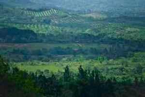 Vista desde la falda del Cerro Chichibali