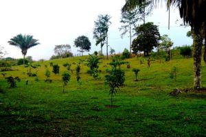 Valle Miraflores Enero 201519